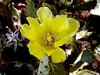 Cactus-Prickly Pear-Fragile-2004-05-16-0001