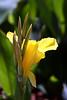 Canna-2007-05-05-0001