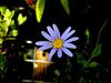 Anemone-2003-07-29-0001