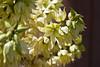 Cactus, Yucca-Blue-2010-04-18-0001