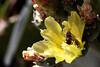Cactus-Prickly Pear-2007-05-26-0001
