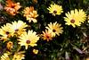 Daisy-2006-04-09-0004