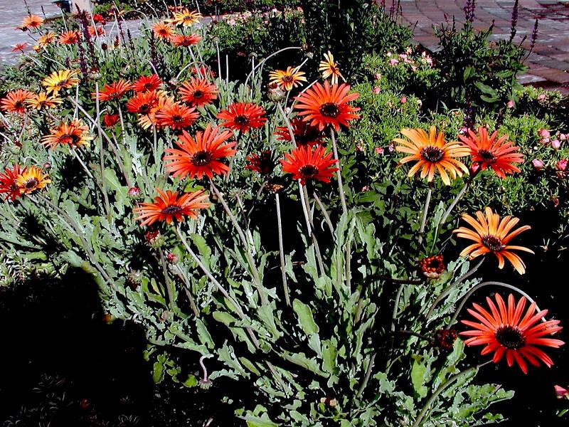 Daisy-2003-08-01-0001