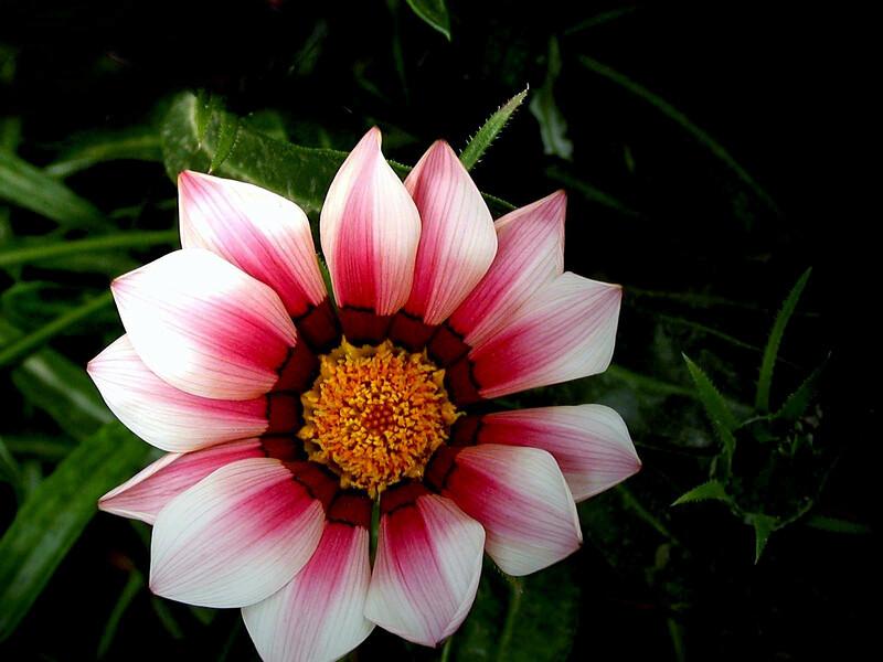 Daisy-2003-12-07-0002