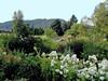 Escallonia-White-2003-08-01-0029