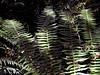 Fern-2003-07-25-0001