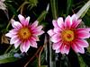 Daisy-2003-12-07-0006