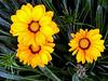 Daisy-2003-12-07-0007