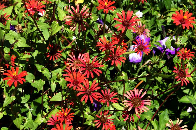 Daisy-African-2006-08-24-0001