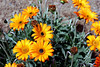 Daisy-2006-04-09-0003