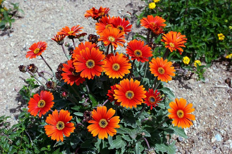 Daisy-2006-04-09-0002