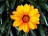 Daisy-2003-12-07-0004