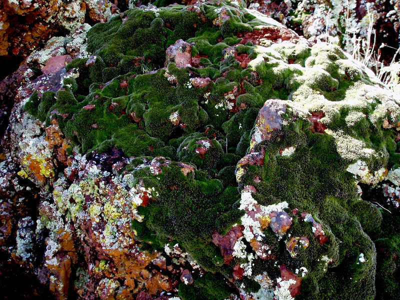 Moss-2004-03-14-0001