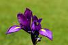 Iris-2006-04-09-0001