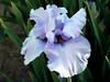 Iris-Swing N Sway-2005-04-11-0001