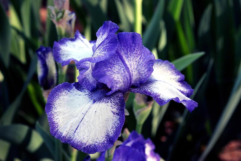 Iris-Kissing Circle-2005-04-11-0001