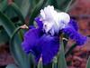 Iris-Over Alaska-2005-04-11-0001