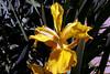 Iris-Arizona Convijion-2005-04-11-0001