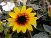 Sunray-2003-09-05-0001