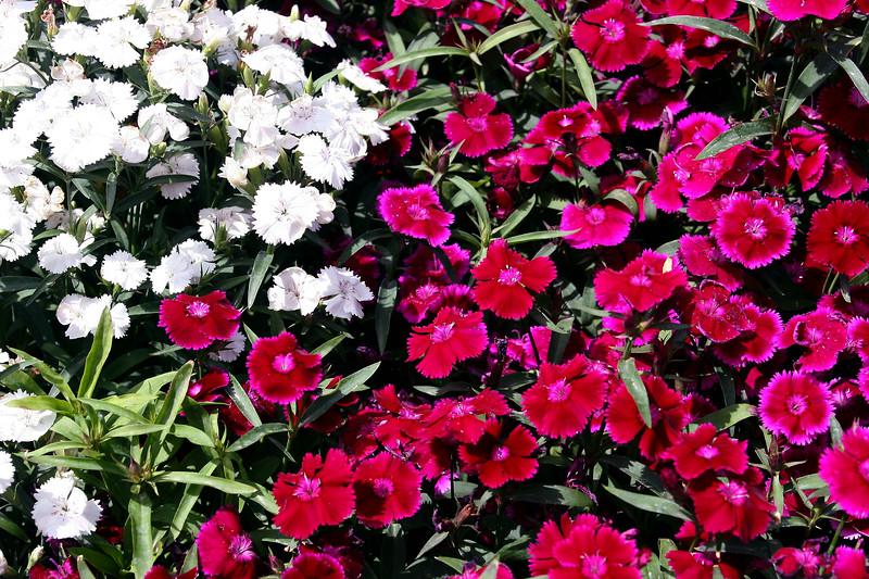 Pinks-2006-04-09-0002