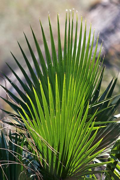 V-Palm-2007-12-31-0001