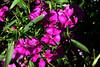 Pinks-2005-06-28-0002