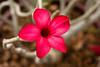Rose of the Desert-2010-03-28-0001