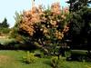 Smoke Tree-2003-08-01-0003