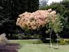 Smoke Tree-2003-08-01-0001