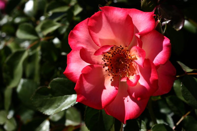 Rose-Sadler's Wells-2007-04-01-0007