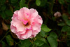 Rose-Lorraine Lee-2005-07-23-0001