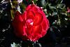 Rose-Granda-2006-04-01-0001
