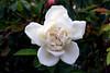 Rose-Virgo-2005-07-23-0001
