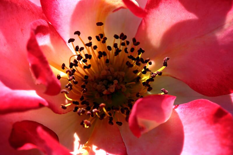 Rose-Sadler's Wells-2007-04-01-0002