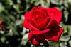 Rose-Olympiad-2007-04-01-0001