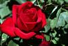 Rose-Olympiad-2007-04-01-0002