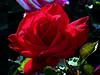 Rose-Olympiad-2005-04-25-0001