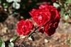 Rose-Showbiz-2006-09-07-0001