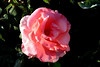 Rose-Lorraine Lee-2005-04-25-0001
