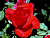 Rose-Olympiad-2004-04-18-0001