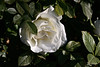 Rose-Pascali-2007-01-09-0001
