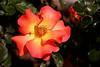Rose-Playboy-2006-04-09-0001