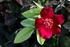 Rose-Ain't Misbehavin'-2007-06-10-0001