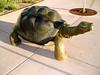 Turtle-2004-11-25-0001