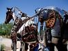 Horse-2004-08-29-0002<br /> Located in Fountain Hill, AZ.