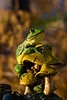 Frog-2010-02-14-0001