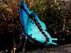 Butterfly-2004-03-13-0003