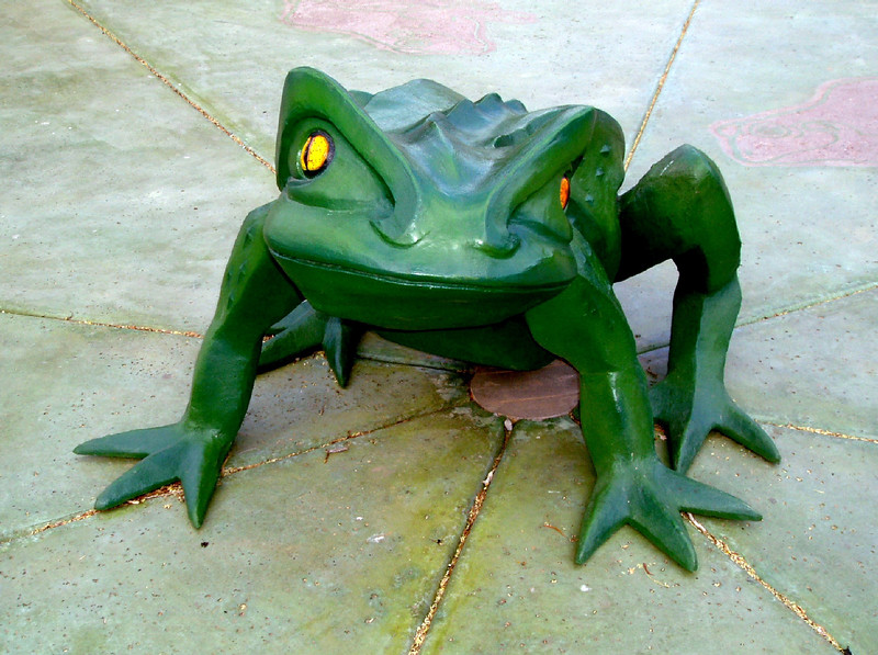 Frog-AZ-Phoenix-Zoo-2004-10-17-0003