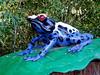 Frog-AZ-Phoenix-Zoo-2004-10-17-0002