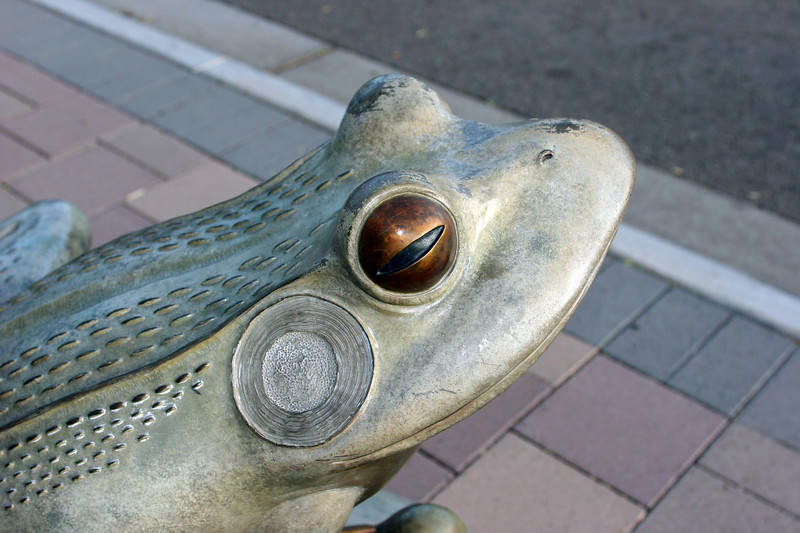 Frog-AZ-Mesa-2005-07-24-0002